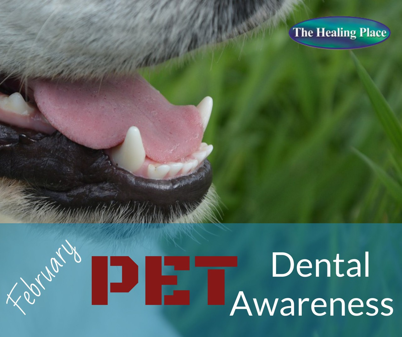 Feb pet dental awareness