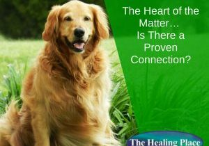 Heart disease in dogs